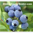 Supply Blueberry extract(Anthocyanin,Arbutin)