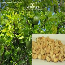 Bael Fruit Tree Seeds ( Aegle marmelos )