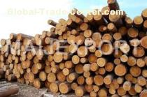 LOGS OF PINE AND SPRUCE