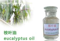 Eucalyptus Oil,Eucalyptus essential oil