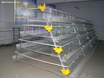 Poultry Cage for Layer Chicken Farm