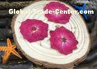 Red Rose Natural Dried Flowers Vacuum Packing Diameter 3 - 3.5CM For Wedding Decoration