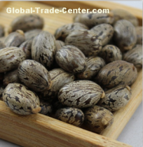 2095 Bi ma zi High Quality Castor Seeds for Making Oil
