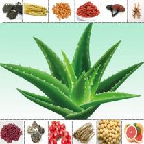 Aloe Extract  95% Aloeemodin Extract from Aloe Vera