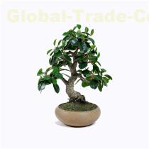 Artificial Ficus Microcarpa