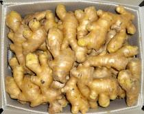 Shandong air dried ginger with best quality