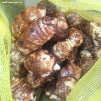 shandong fresh taro wholesaler