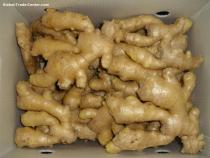 Air dried ginger 300g and up from Anqiu
